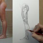 Анатомија